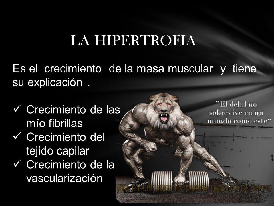 LA HIPERTROFIA Crecimiento de las mío fibrillas Crecimiento del tejido capilar Crecimiento de la vascularización Es el crecimiento de la masa muscular