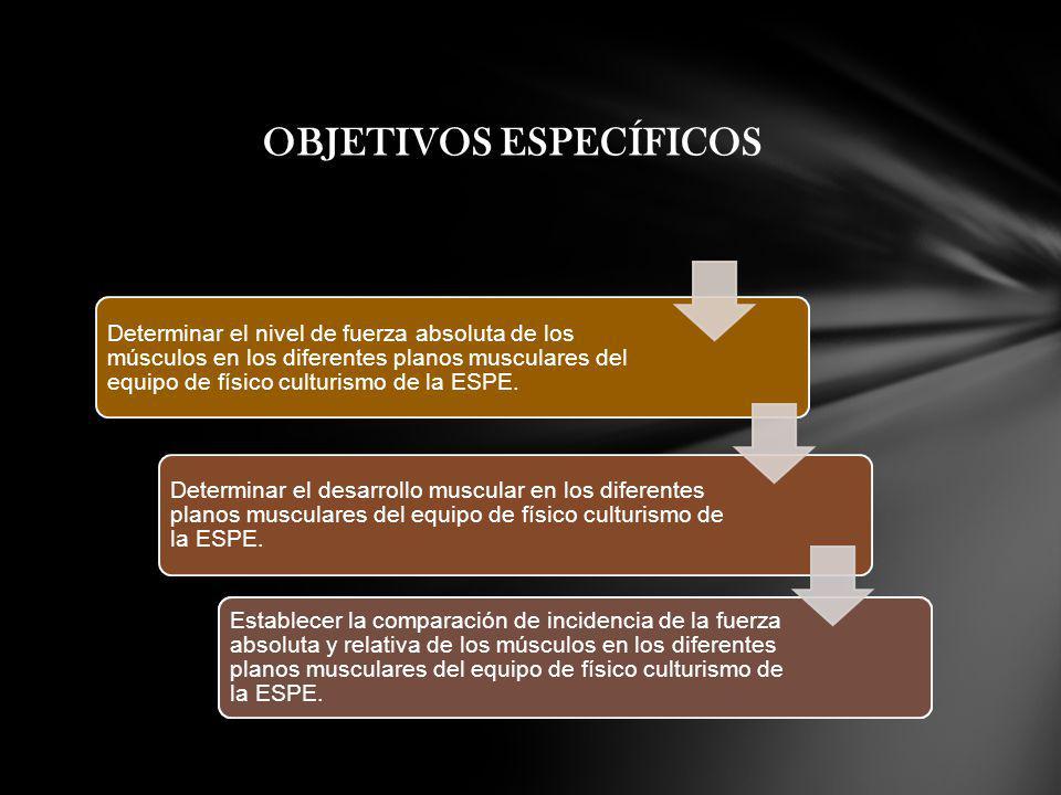 Determinar el nivel de fuerza absoluta de los músculos en los diferentes planos musculares del equipo de físico culturismo de la ESPE. Determinar el n