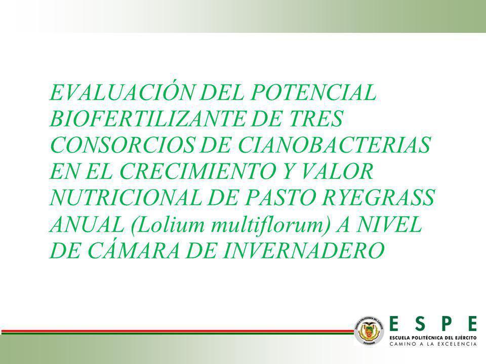 EVALUACIÓN DEL POTENCIAL BIOFERTILIZANTE DE TRES CONSORCIOS DE CIANOBACTERIAS EN EL CRECIMIENTO Y VALOR NUTRICIONAL DE PASTO RYEGRASS ANUAL (Lolium mu