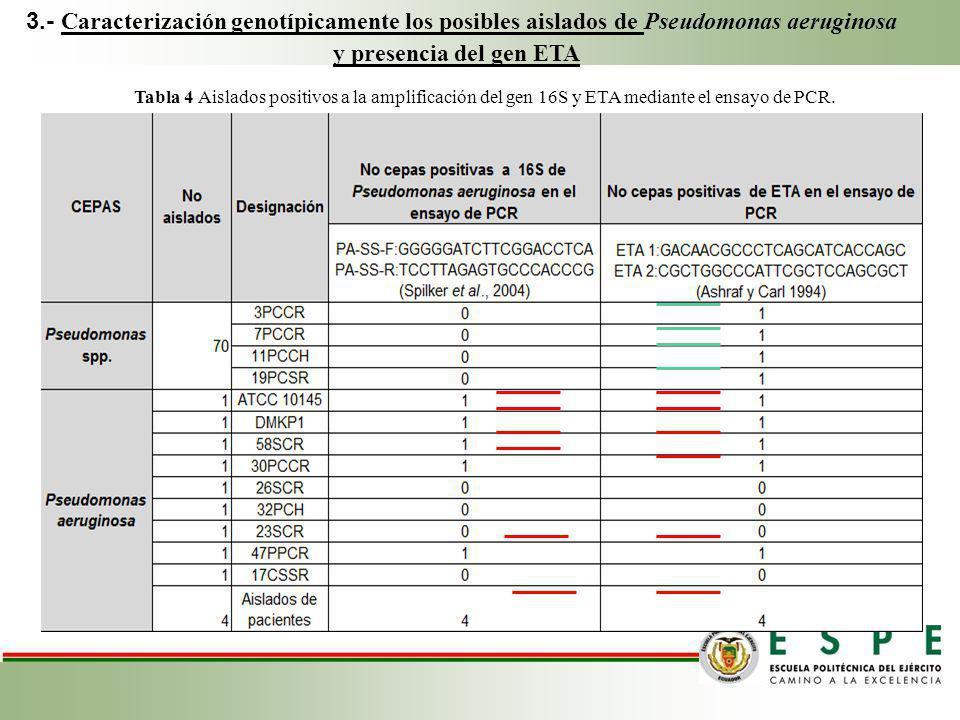 3.- Caracterización genotípicamente los posibles aislados de Pseudomonas aeruginosa y presencia del gen ETA Tabla 4 Aislados positivos a la amplificac