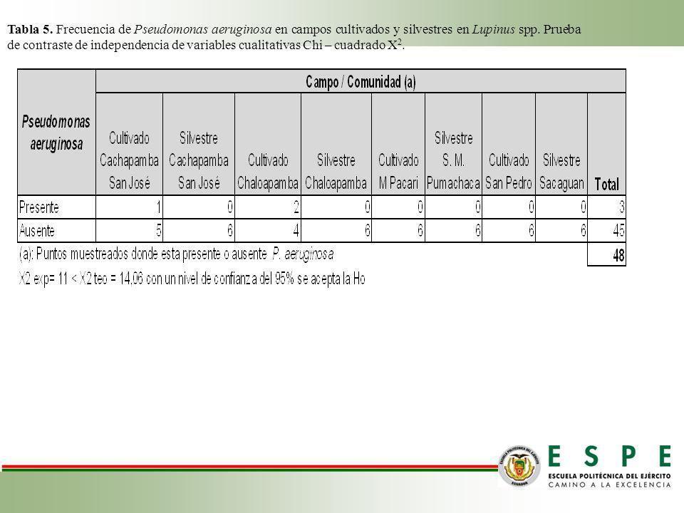 Tabla 5. Frecuencia de Pseudomonas aeruginosa en campos cultivados y silvestres en Lupinus spp. Prueba de contraste de independencia de variables cual