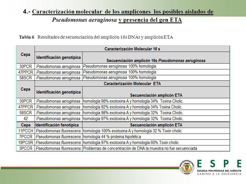 4.- Caracterización molecular de los amplicones los posibles aislados de Pseudomonas aeruginosa y presencia del gen ETA Tabla 6 Resultados de secuenci