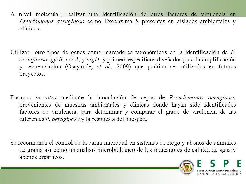 A nivel molecular, realizar una identificación de otros factores de virulencia en Pseudomonas aeruginosa como Exoenzima S presentes en aislados ambien