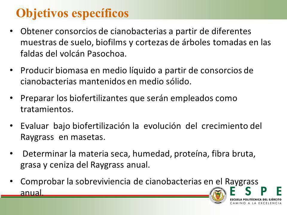 Objetivos específicos Obtener consorcios de cianobacterias a partir de diferentes muestras de suelo, biofilms y cortezas de árboles tomadas en las fal