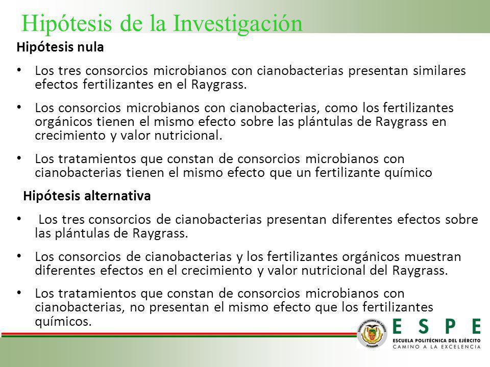 Hipótesis de la Investigación Hipótesis nula Los tres consorcios microbianos con cianobacterias presentan similares efectos fertilizantes en el Raygra