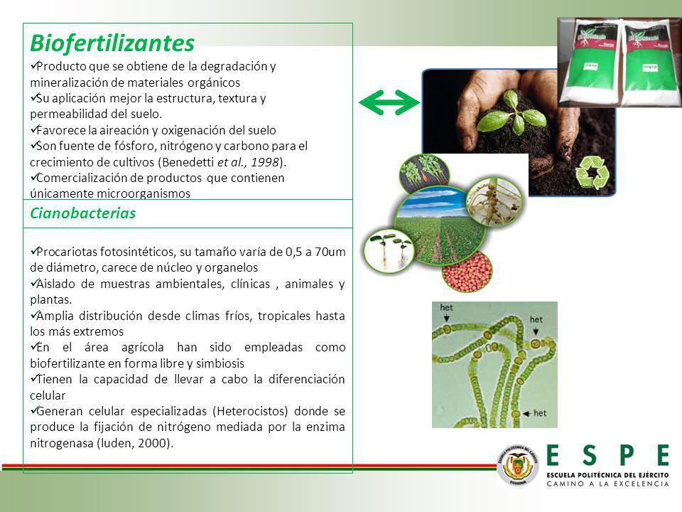 Biofertilizantes Producto que se obtiene de la degradación y mineralización de materiales orgánicos Su aplicación mejor la estructura, textura y perme