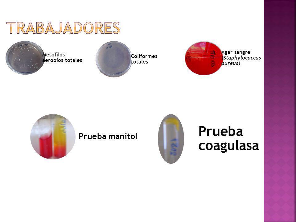 Mesófilos aerobios totales Coliformes totales Agar sangre (Staphylococcus aureus) Prueba manitol Prueba coagulasa
