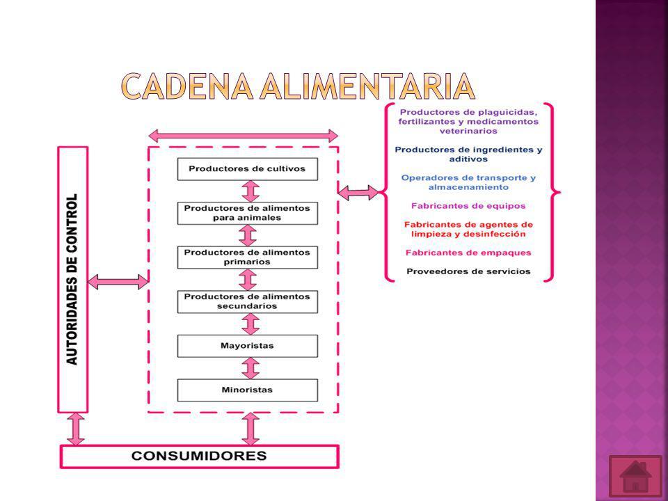 Manual de Buenas Prácticas de Manufactura Reglamento de Buenas Prácticas para Alimentos Procesados Sistemas de Gestión de la Inocuidad de los Alimentos Codex Alimentarius