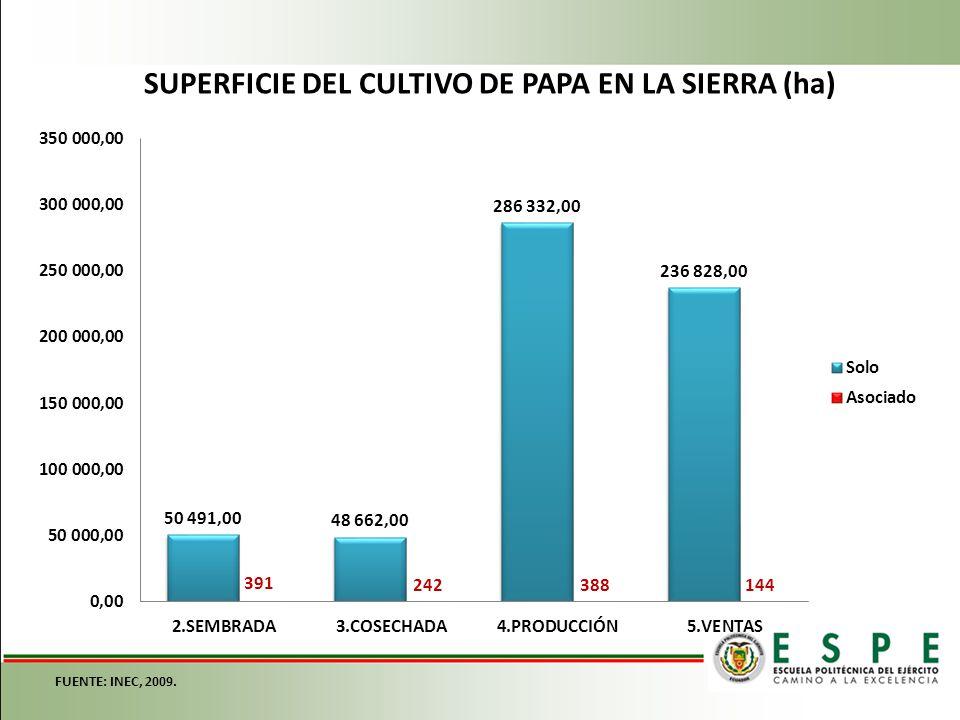 SUPERFICIE DEL CULTIVO DE PAPA EN LA SIERRA (ha) FUENTE: INEC, 2009.
