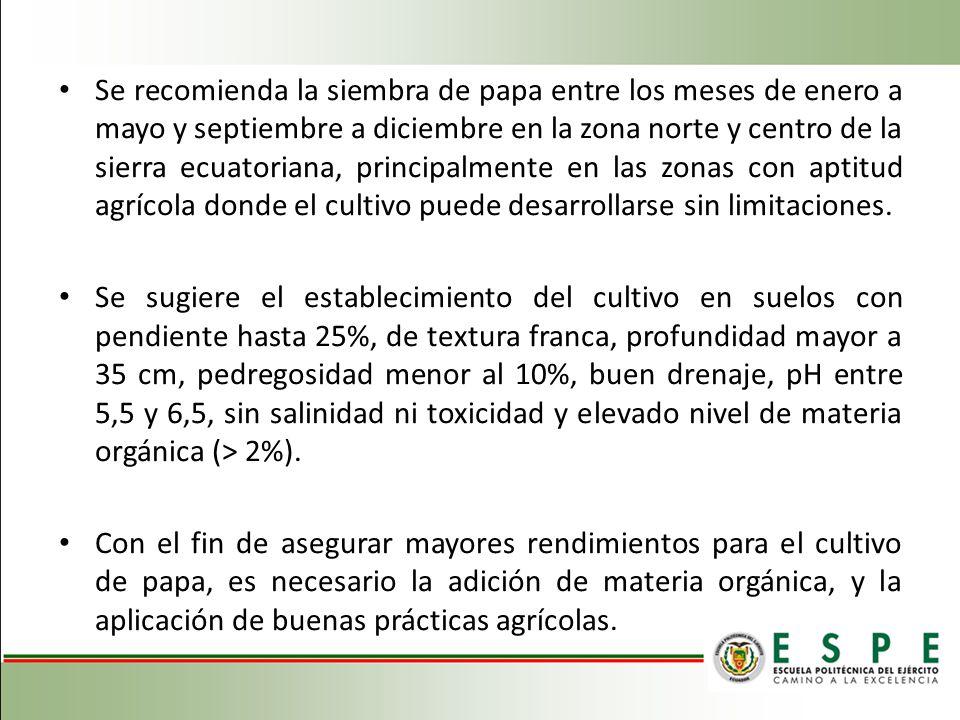 Se recomienda la siembra de papa entre los meses de enero a mayo y septiembre a diciembre en la zona norte y centro de la sierra ecuatoriana, principa
