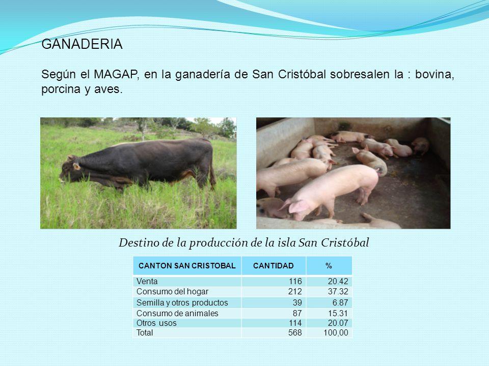 CANTON SAN CRISTOBALCANTIDAD% Venta11620.42 Consumo del hogar21237.32 Semilla y otros productos396.87 Consumo de animales8715.31 Otros usos11420.07 To