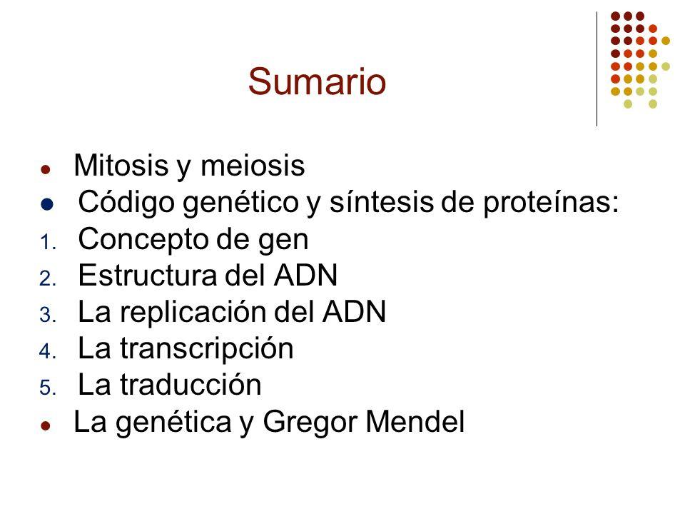 Sumario Mitosis y meiosis Código genético y síntesis de proteínas: 1. Concepto de gen 2. Estructura del ADN 3. La replicación del ADN 4. La transcripc