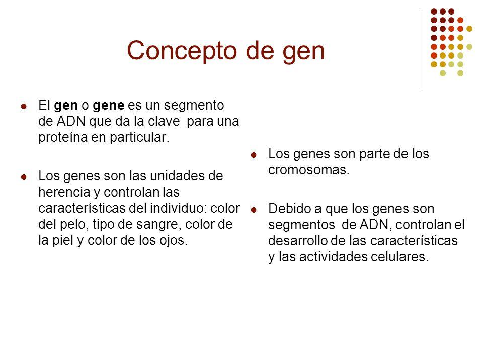 Concepto de gen El gen o gene es un segmento de ADN que da la clave para una proteína en particular. Los genes son las unidades de herencia y controla