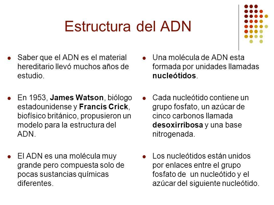 Estructura del ADN Saber que el ADN es el material hereditario llevó muchos años de estudio. En 1953, James Watson, biólogo estadounidense y Francis C