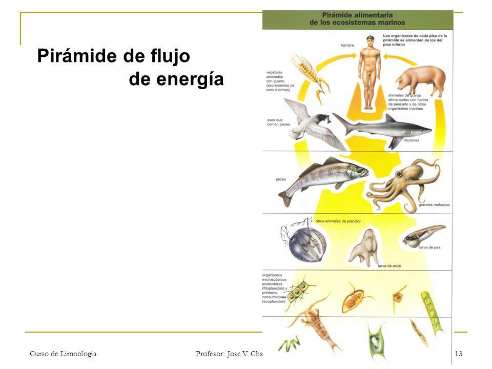 Curso de Limnologia Profesor: Jose V. Chang Gómez 13 Pirámide de flujo de energía