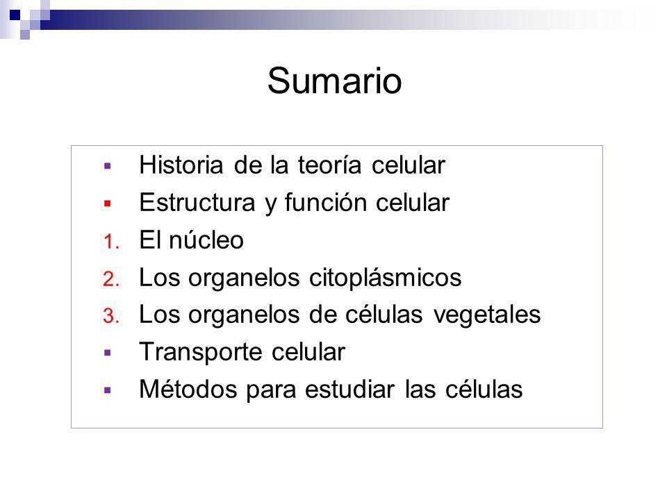 Sumario Historia de la teoría celular Estructura y función celular 1. El núcleo 2. Los organelos citoplásmicos 3. Los organelos de células vegetales T