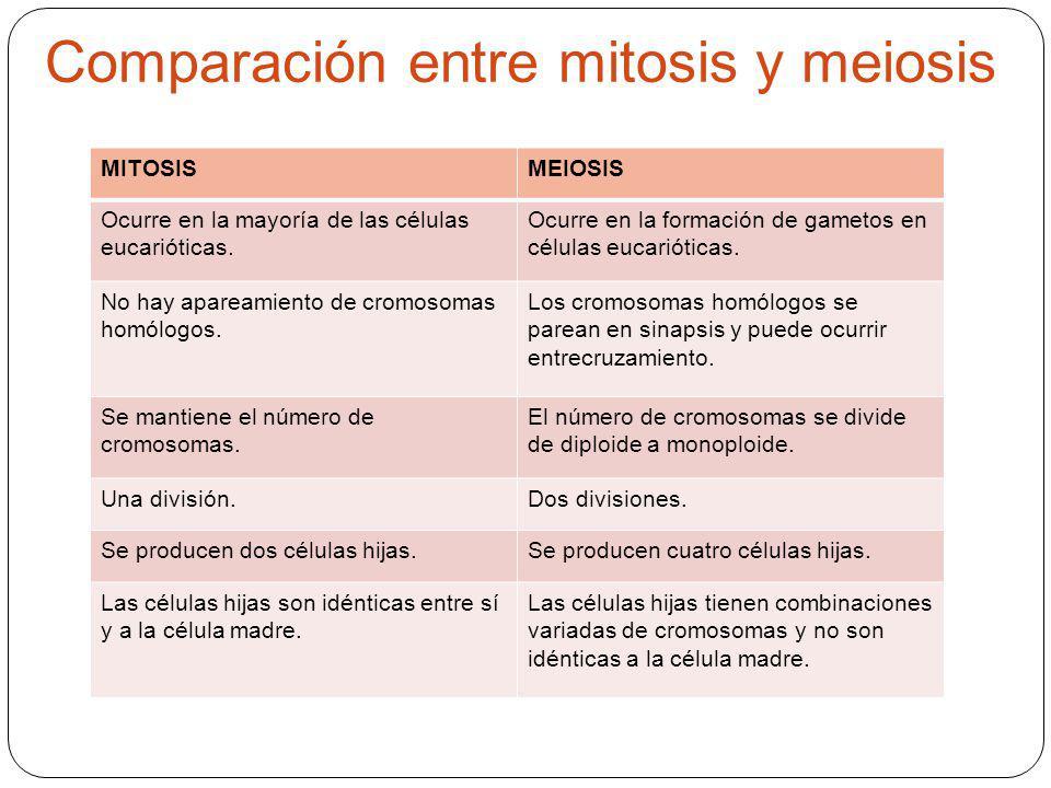 Comparación entre mitosis y meiosis MITOSISMEIOSIS Ocurre en la mayoría de las células eucarióticas. Ocurre en la formación de gametos en células euca