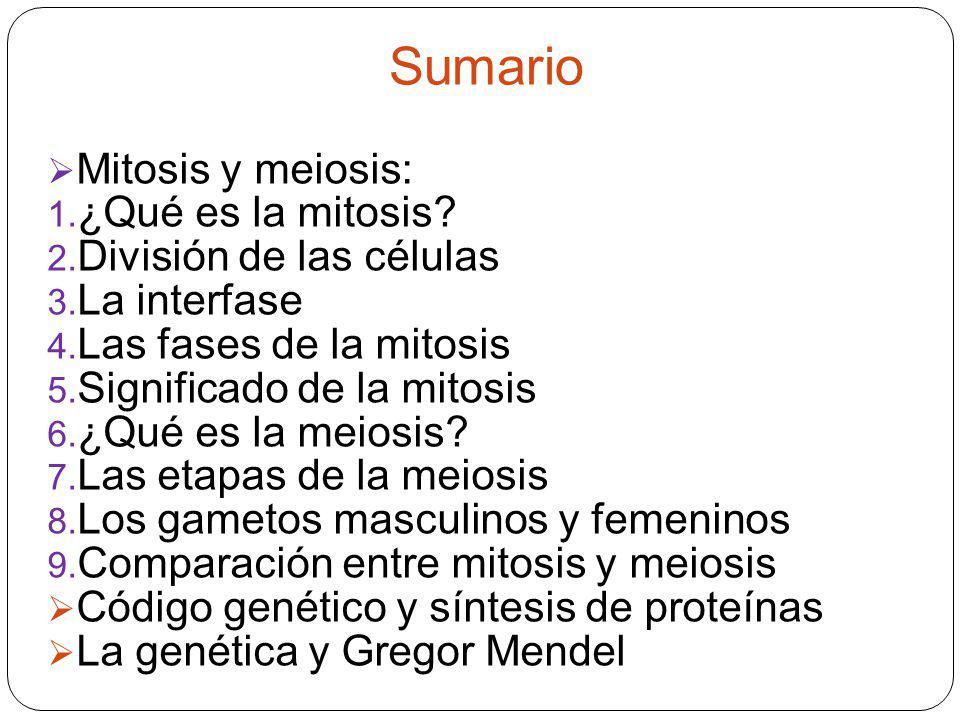 Sumario Mitosis y meiosis: 1. ¿Qué es la mitosis? 2. División de las células 3. La interfase 4. Las fases de la mitosis 5. Significado de la mitosis 6