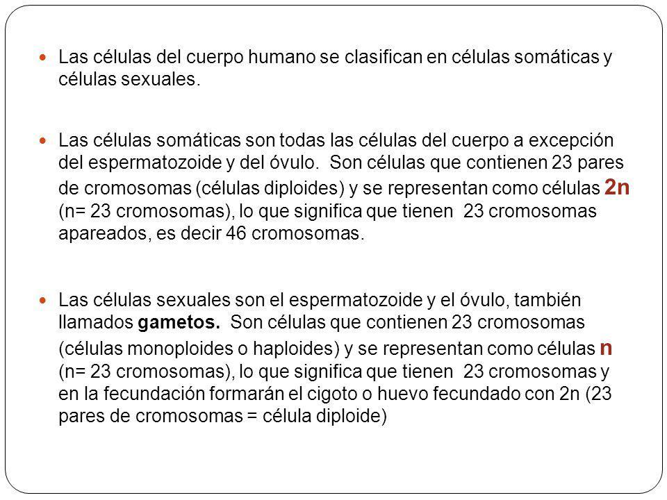 Las células del cuerpo humano se clasifican en células somáticas y células sexuales. Las células somáticas son todas las células del cuerpo a excepció