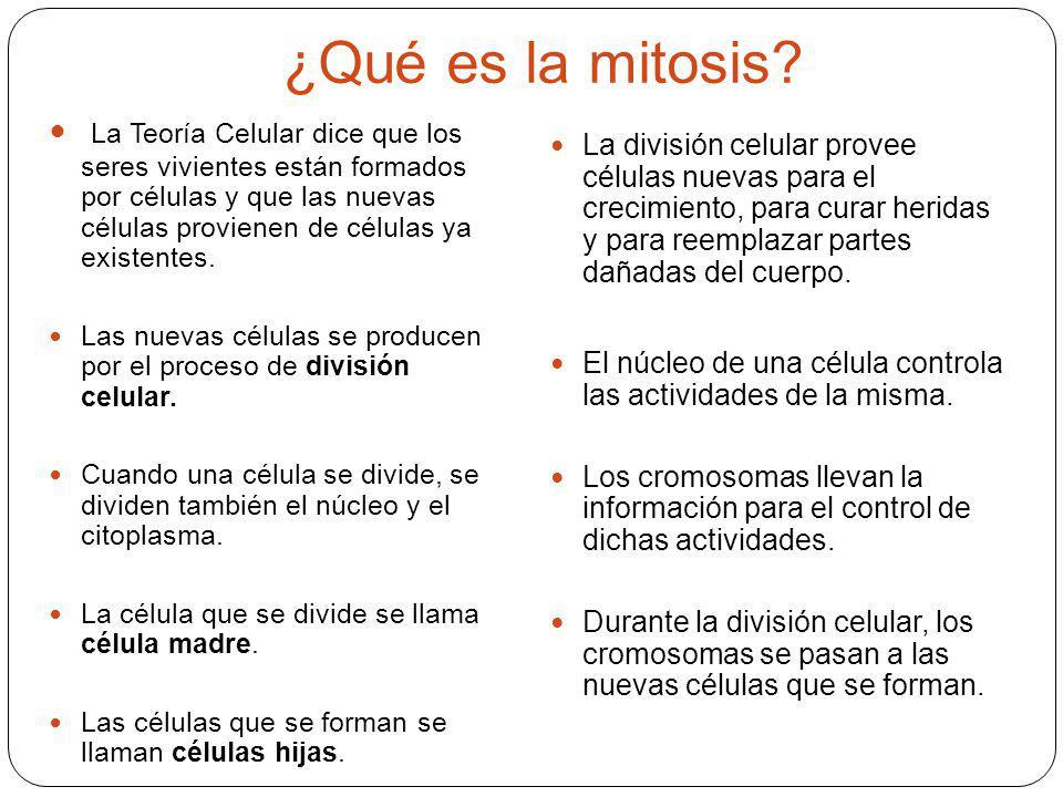 ¿Qué es la mitosis? La Teoría Celular dice que los seres vivientes están formados por células y que las nuevas células provienen de células ya existen