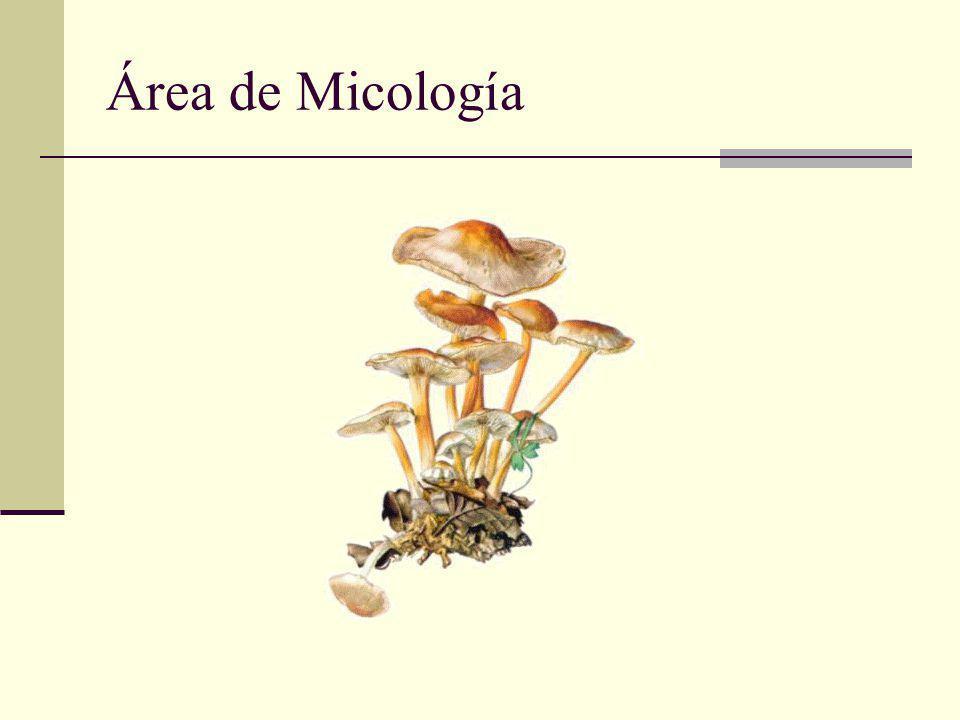 Área de Micología
