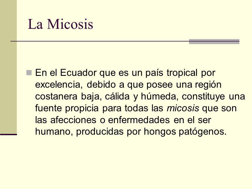 La Micosis En el Ecuador que es un país tropical por excelencia, debido a que posee una región costanera baja, cálida y húmeda, constituye una fuente