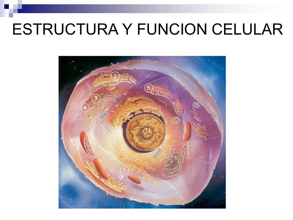 Sumario Historia de la Teoría Celular Estructura y función celular 1.