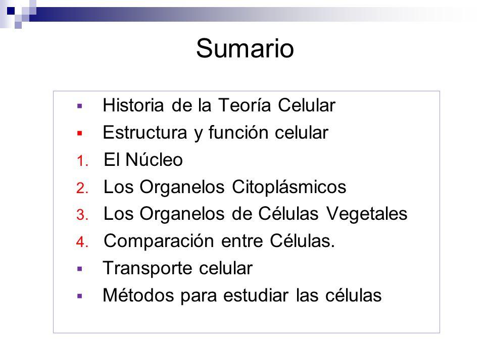 Sumario Historia de la Teoría Celular Estructura y función celular 1. El Núcleo 2. Los Organelos Citoplásmicos 3. Los Organelos de Células Vegetales 4