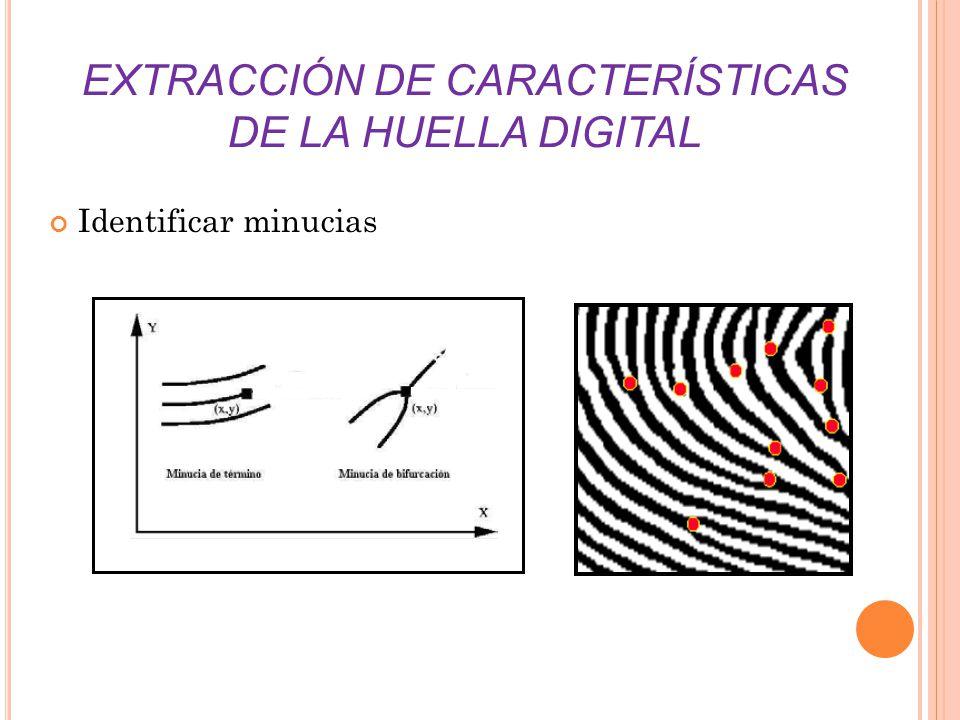 EXTRACCIÓN DE CARACTERÍSTICAS DE LA HUELLA DIGITAL Identificar minucias