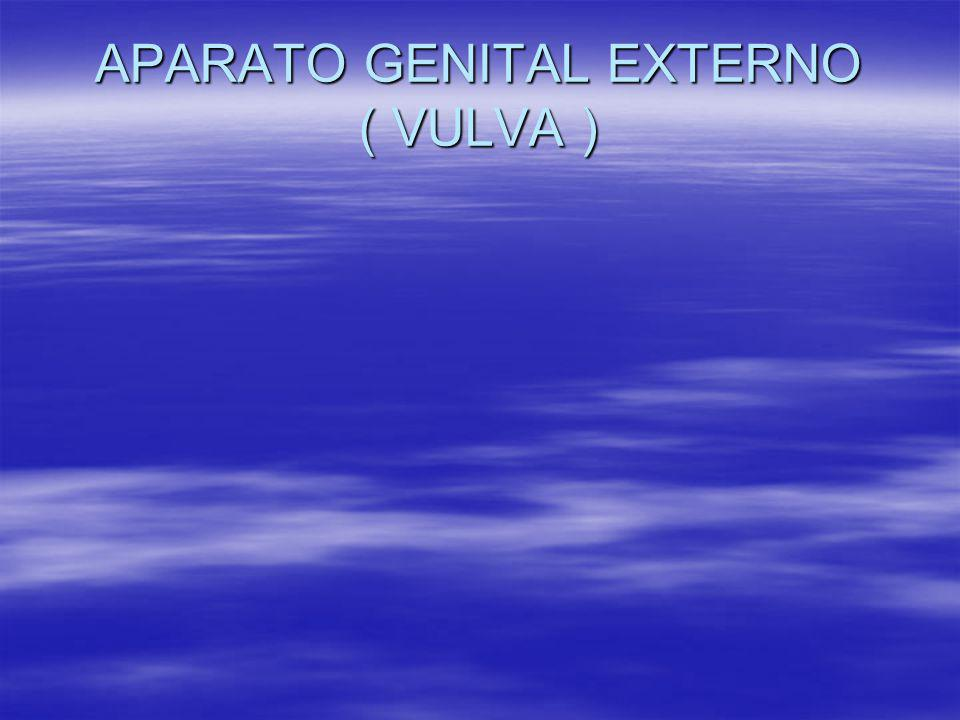 APARATO GENITAL EXTERNO ( VULVA )