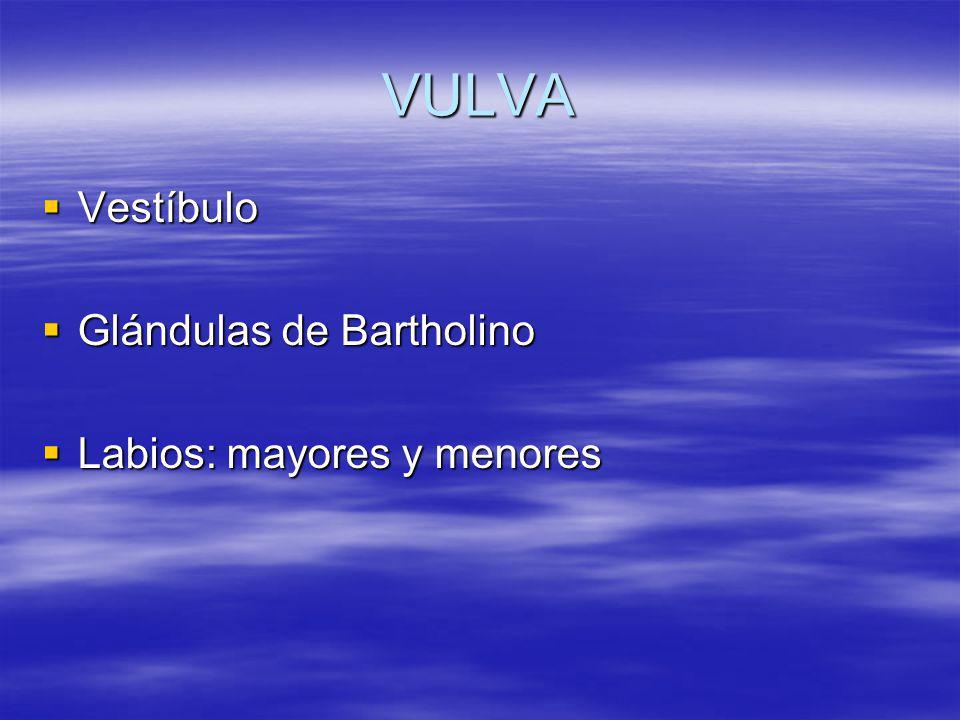 VULVA Vestíbulo Vestíbulo Glándulas de Bartholino Glándulas de Bartholino Labios: mayores y menores Labios: mayores y menores