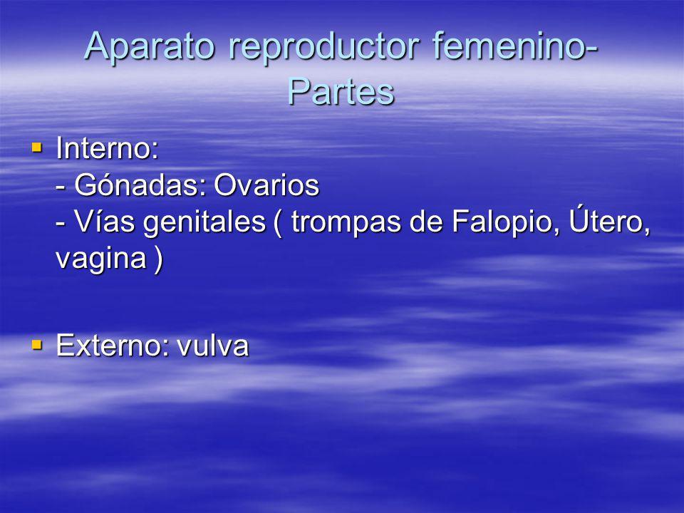 Aparato reproductor femenino- Partes Interno: - Gónadas: Ovarios - Vías genitales ( trompas de Falopio, Útero, vagina ) Interno: - Gónadas: Ovarios -