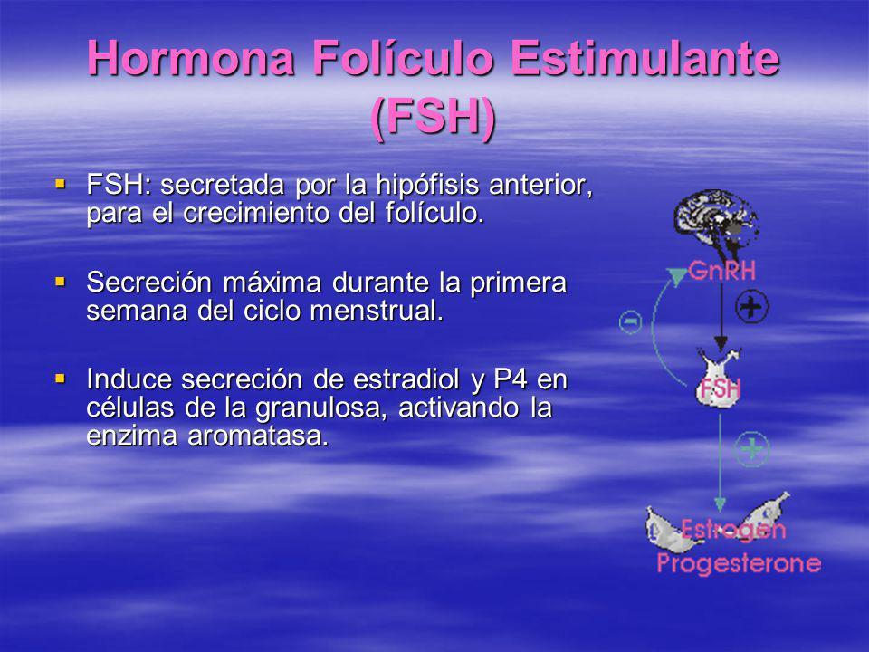 Hormona Folículo Estimulante (FSH) FSH: secretada por la hipófisis anterior, para el crecimiento del folículo. FSH: secretada por la hipófisis anterio