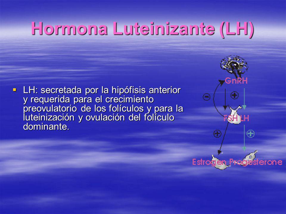 Hormona Luteinizante (LH) LH: secretada por la hipófisis anterior y requerida para el crecimiento preovulatorio de los folículos y para la luteinizaci