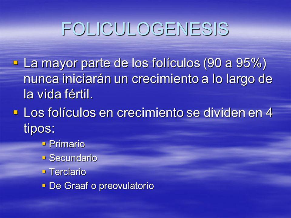FOLICULOGENESIS La mayor parte de los folículos (90 a 95%) nunca iniciarán un crecimiento a lo largo de la vida fértil. La mayor parte de los folículo