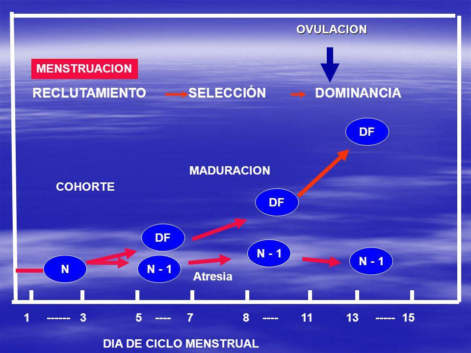 OVULACION 1 ------ 3 5 ---- 7 8 ---- 11 13 ----- 15 DIA DE CICLO MENSTRUAL Atresia COHORTE MADURACION RECLUTAMIENTO SELECCIÓN DOMINANCIA MENSTRUACION