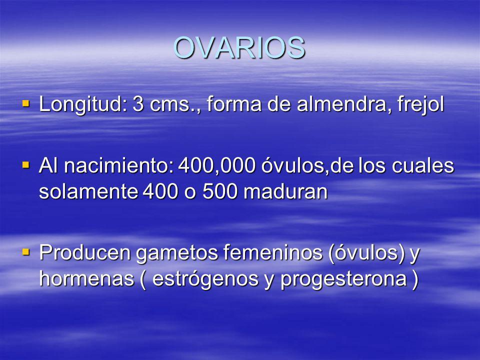 OVARIOS Longitud: 3 cms., forma de almendra, frejol Longitud: 3 cms., forma de almendra, frejol Al nacimiento: 400,000 óvulos,de los cuales solamente