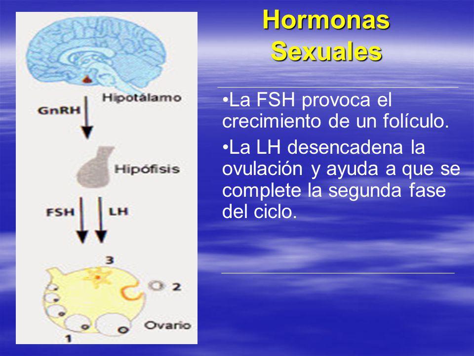 Hormonas Sexuales La FSH provoca el crecimiento de un folículo. La LH desencadena la ovulación y ayuda a que se complete la segunda fase del ciclo.