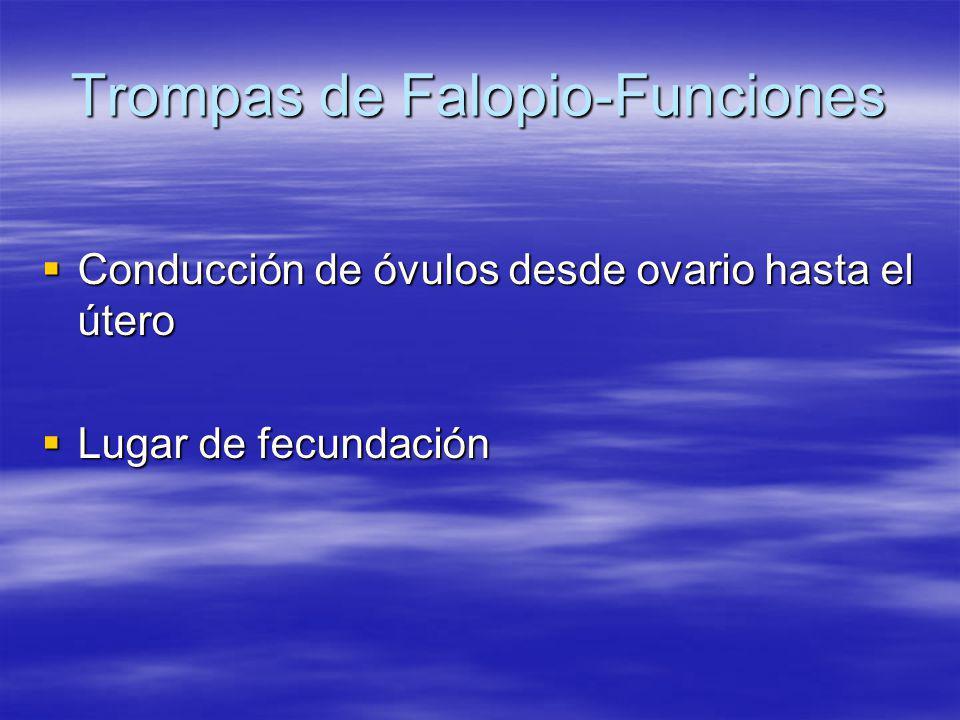 Trompas de Falopio-Funciones Conducción de óvulos desde ovario hasta el útero Conducción de óvulos desde ovario hasta el útero Lugar de fecundación Lu