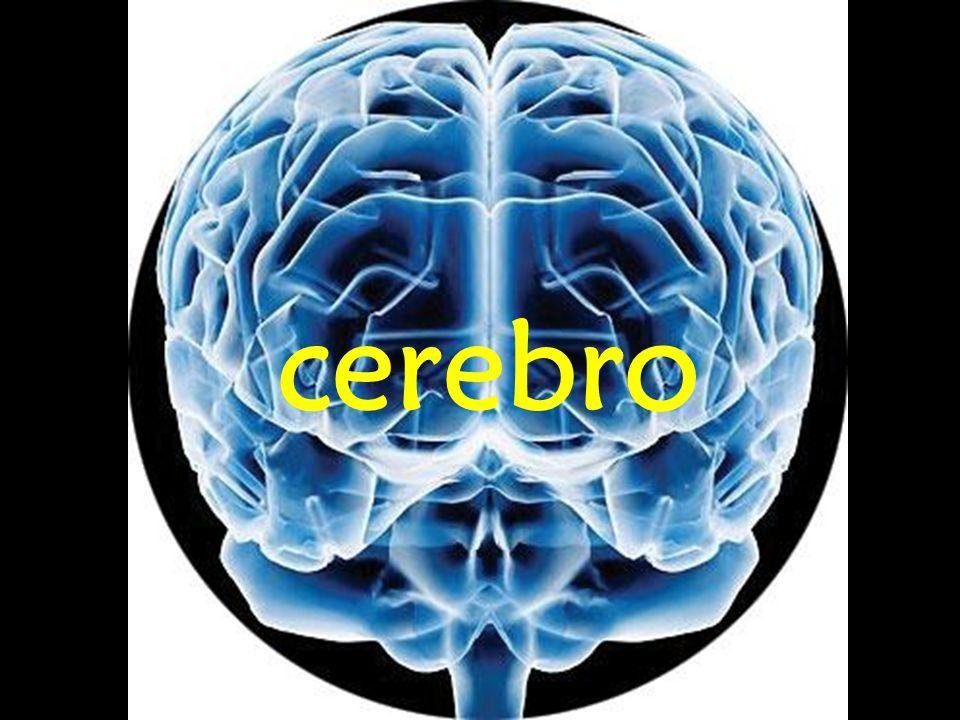Existen múltiples tratamientos en los cuales se usa la electricidad para controlar o mejorar desordenes del sistema nervioso.
