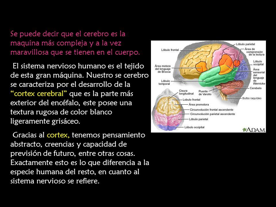 Se puede decir que el cerebro es la maquina más compleja y a la vez maravillosa que se tienen en el cuerpo. El sistema nervioso humano es el tejido de