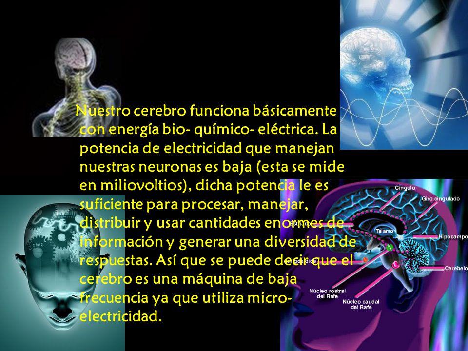 Nuestro cerebro funciona básicamente con energía bio- químico- eléctrica. La potencia de electricidad que manejan nuestras neuronas es baja (esta se m
