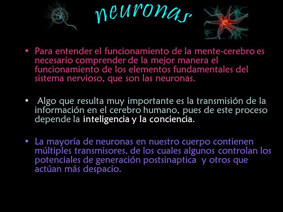El punto nodal de la neurotransmisión es la sinapsis que es la conexión funcional entre neuronas.