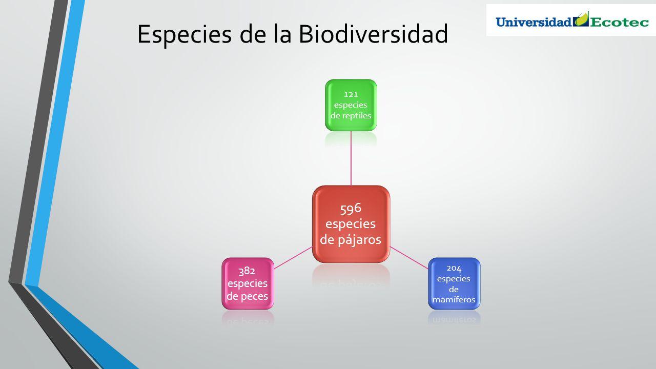 EspeciesCantidad Reptiles121 Pájaros596 Peces382 Mamíferos204