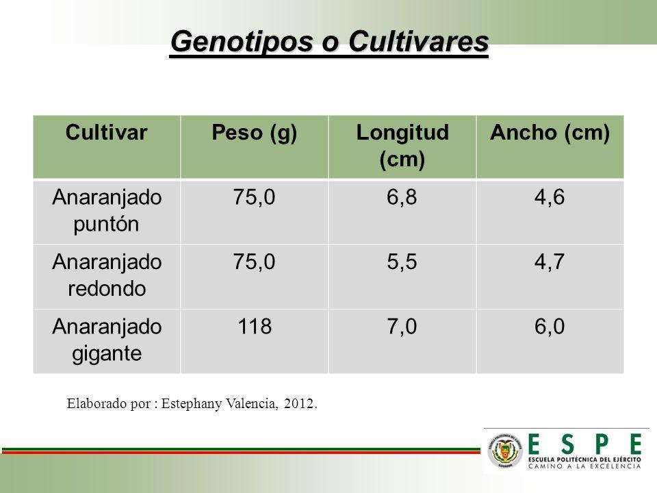 Genotipos o Cultivares CultivarPeso (g)Longitud (cm) Ancho (cm) Anaranjado puntón 75,06,84,6 Anaranjado redondo 75,05,54,7 Anaranjado gigante 1187,06,
