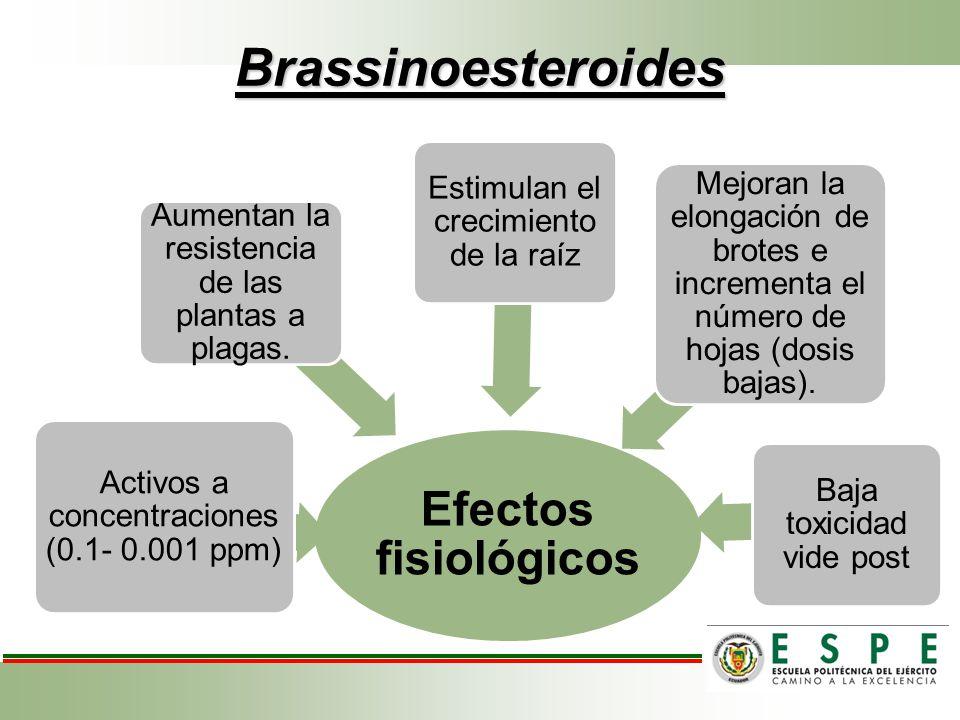 Brassinoesteroides Efectos fisiológicos Activos a concentraciones (0.1- 0.001 ppm) Aumentan la resistencia de las plantas a plagas. Estimulan el creci