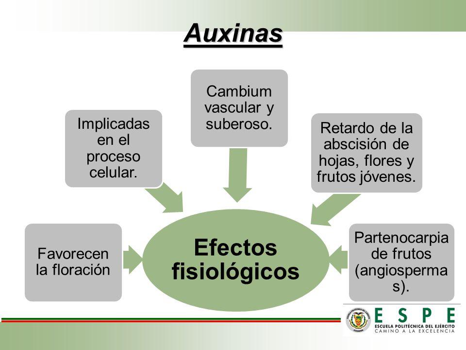 Auxinas Efectos fisiológicos Favorecen la floración Implicadas en el proceso celular. Cambium vascular y suberoso. Retardo de la abscisión de hojas, f