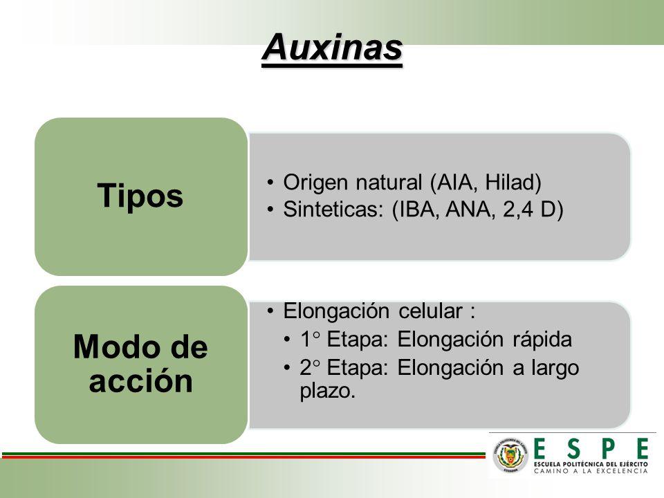 Auxinas Origen natural (AIA, Hilad) Sinteticas: (IBA, ANA, 2,4 D) Tipos Elongación celular : 1 Etapa: Elongación rápida 2 Etapa: Elongación a largo pl