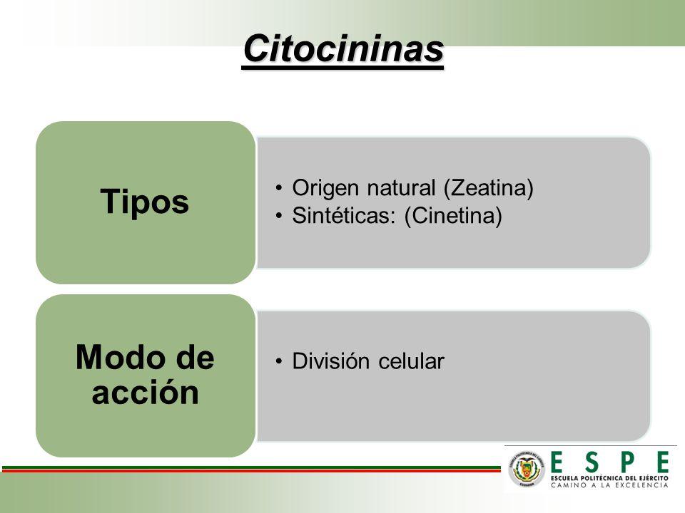 Citocininas Origen natural (Zeatina) Sintéticas: (Cinetina) Tipos División celular Modo de acción