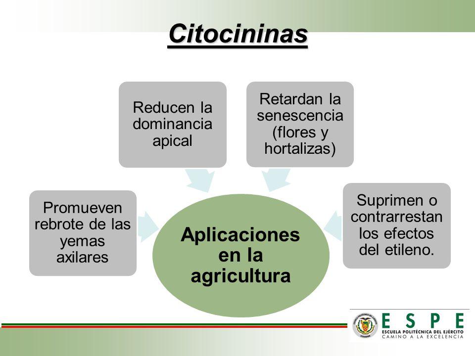 Citocininas Aplicaciones en la agricultura Promueven rebrote de las yemas axilares Reducen la dominancia apical Retardan la senescencia (flores y hort